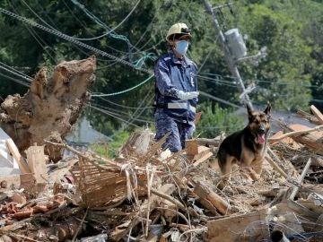 La Fuerza Marítima de Autodefensa de Japón busca víctimas entre los escombros con perros de rescate