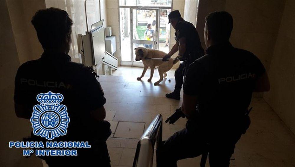 Perro inmovilizado por la Policía