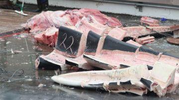 Restos de la ballena azul capturada