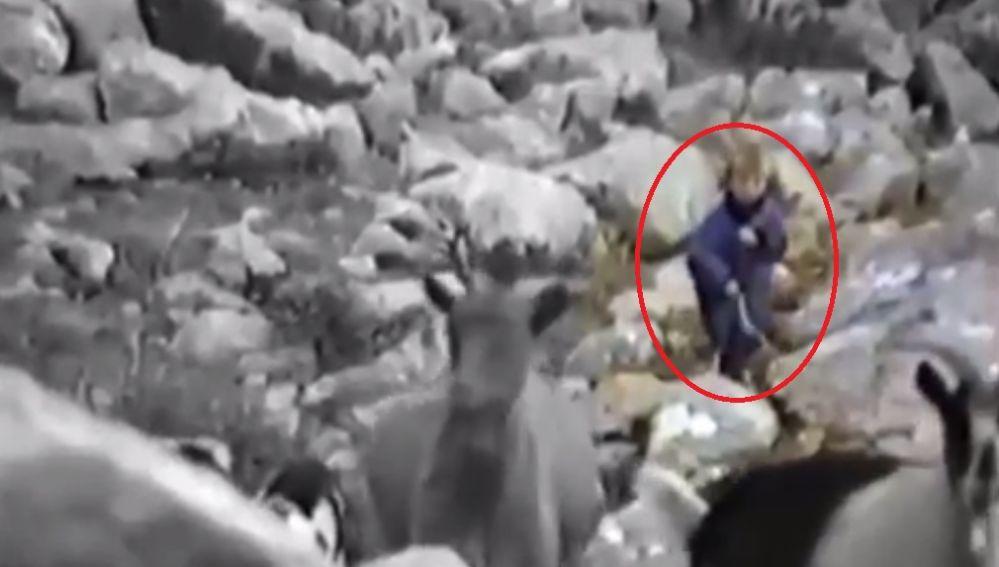 ¿Luka Modric pastoreando ovejas?