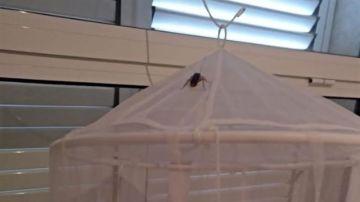 Una cucaracha en la mosquitera