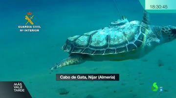 Benjamín, la tortuga que regresa al Mediterráneo sin una aleta tras dos años de recuperación