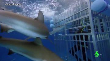 Shaq tiburones