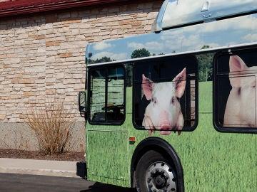 The Pig Adventure