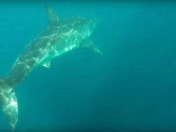 Un tiburón blanco persigue a dos kayakistas