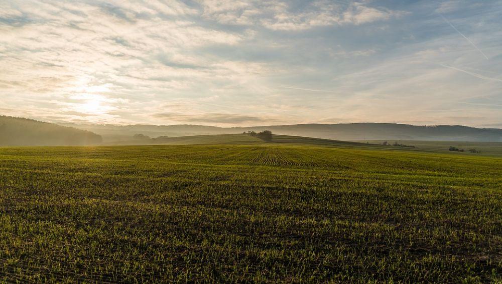 Imagen de archivo de un campo