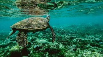 Solo un 13 de los oceanos del mundo permanece salvaje