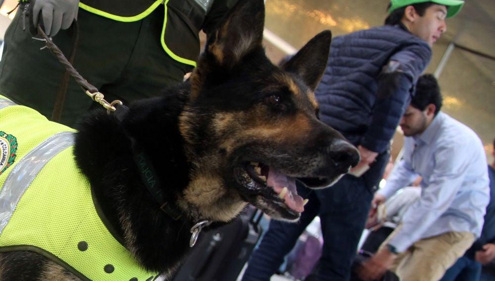 Sombra, la perra policía colombiana