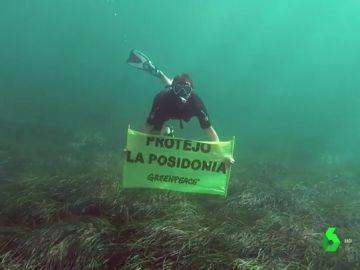 Buzo de Greenpeace en una pradera de Posidonia