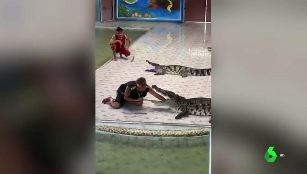 Un especialista mete la mano en la boca de un cocodrilo