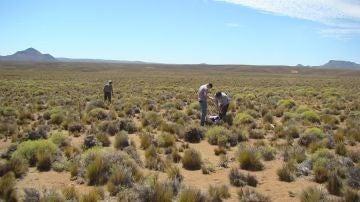 La biodiversidad es fundamental para la estabilidad de los ecosistemas