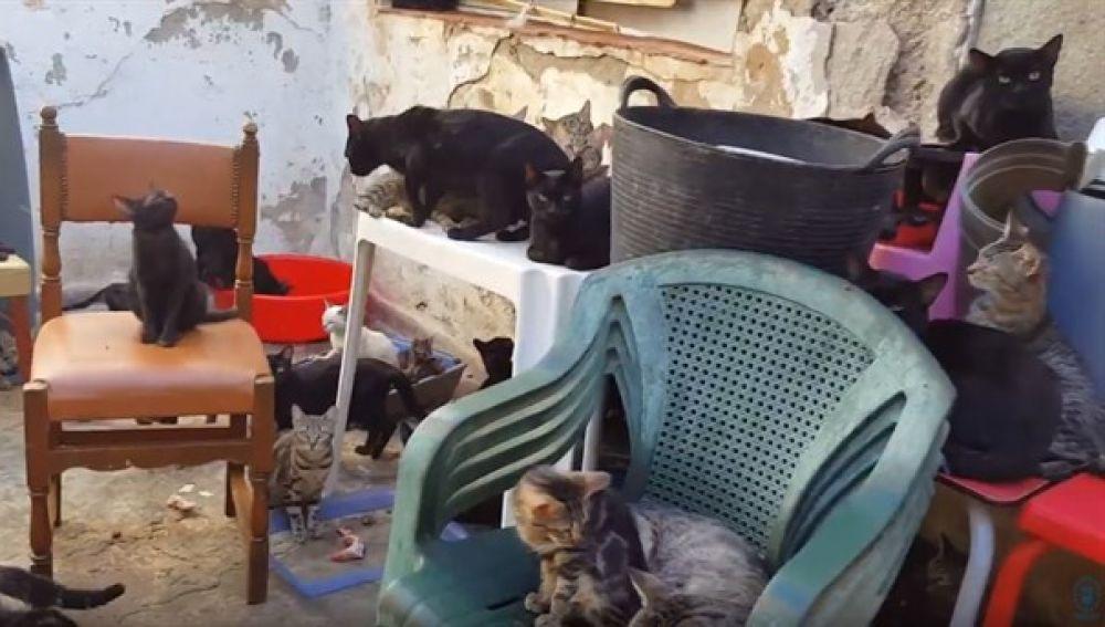En la imagen alguno de los gatos que habitaban en la vivienda.