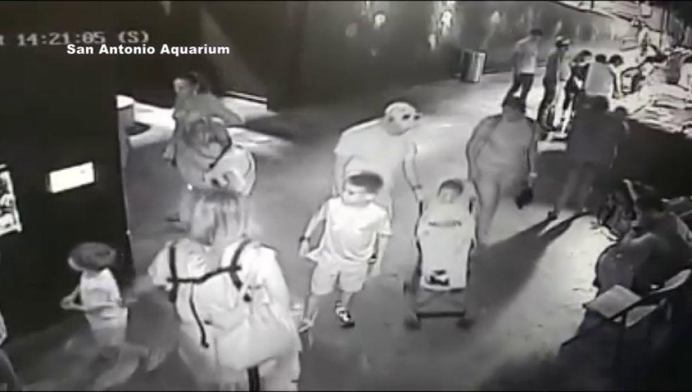 Robar un tiburón usando a un niño y un carrito de bebé y otros extraños casos a los que se ha enfrentado la Policía