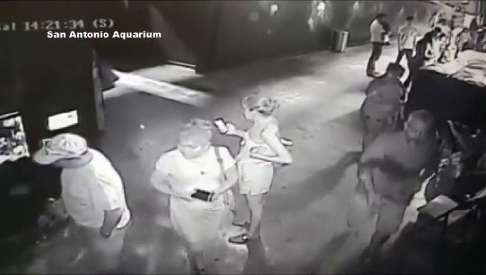 Tres hombres roban un tiburón en un acuario en Texas