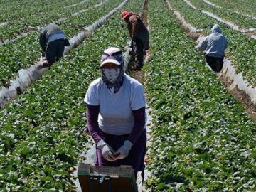 Un grupo de temporeras de la fresa durante una jornada de trabajo