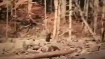 ¿Mito o realidad?: Se cumplen 60 años de la aparición del 'Bigfoot'