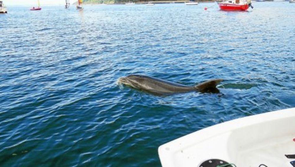 Delfín Zafra que ha provocado el cierre de una playa