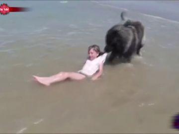 Un perro saca a un niña del agua