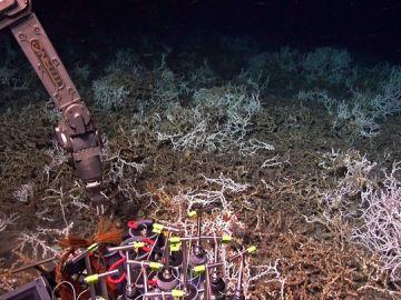 Recogida de muestras del arrecife de coral