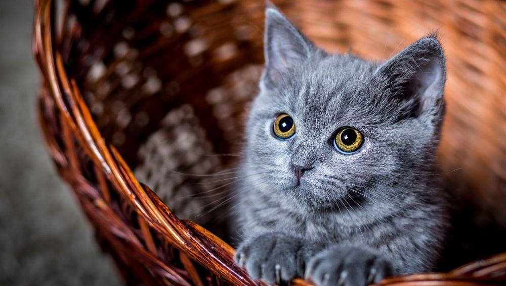 Imagen de archivo de un gato