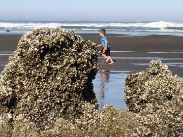 Playa de Oregon, EEUU