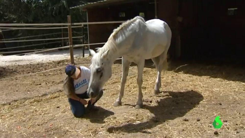 Imagen de un santuario de caballos