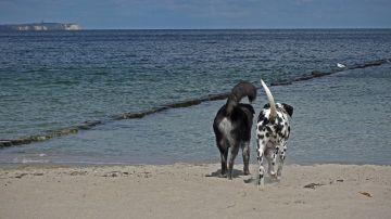 9 playas que puedes visitar con tu perro