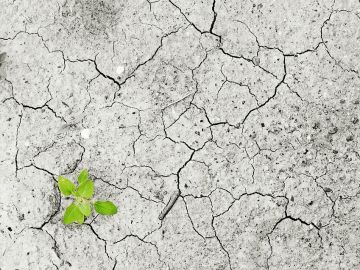 El cambio climático podría modificar el ecosistema de manera significativa