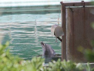 La delfín Honey, abandonada en un acuario