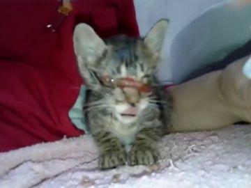 Imagen del gato rescatado en Girona