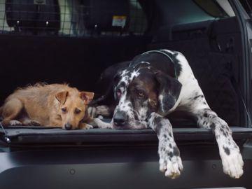 Land Rover paquete para mascotas
