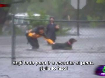 La reportera que salva la vida a un perro