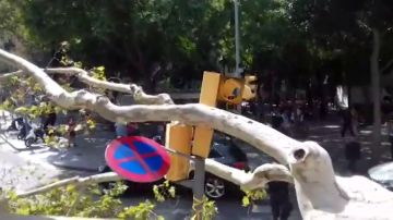 Un árbol de grandes dimensiones cae en el centro de Barcelona