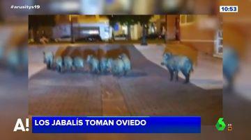 Jabalíes en las calles de Oviedo