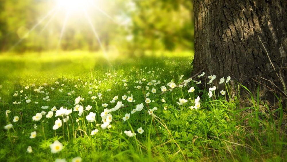 Imagen de flores en el campo