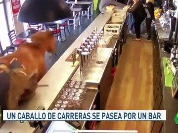 Caballo_Jugones