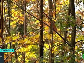 El cambio climático, la razón por la que se podrían perder los colores del otoño