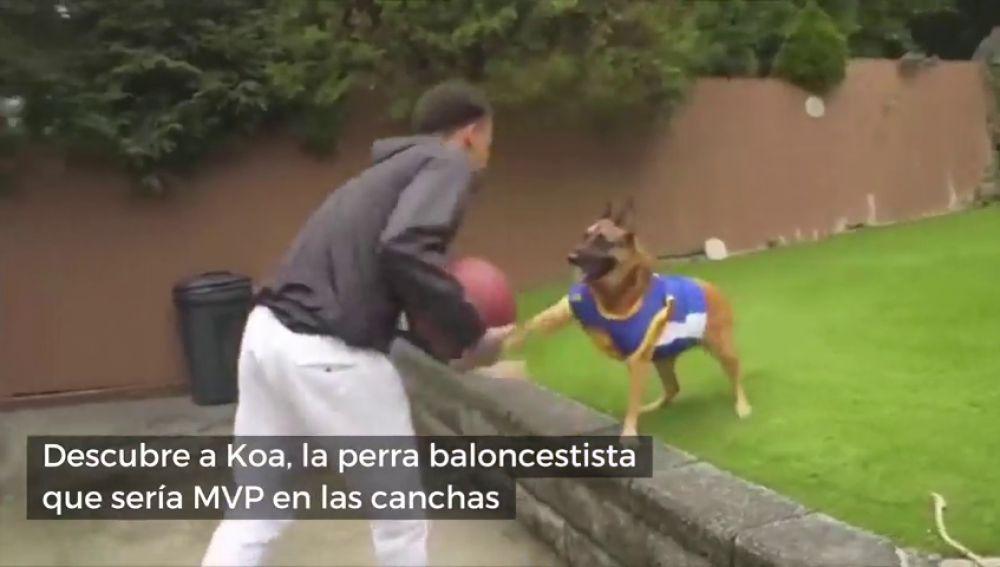 Conoce a Koa, la perra baloncestista que le quitaría el puesto a LeBron en los Lakers