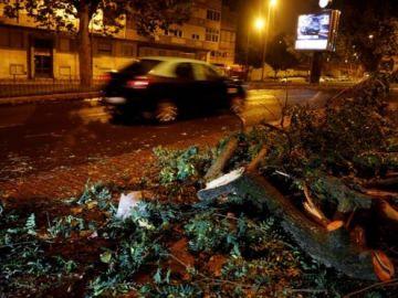 Árboles caídos por el paso de Leslie en Portugal