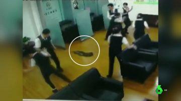 Imagen de la pitón gigante que ha irrumpido en un banco en China