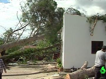 Pinos derrumbados por Leslie en Tarragona