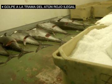 Piezas de atún rojo almacenadas sobre el suelo