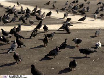 Imagen de archivo de palomas en una plaza