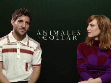 'Animales sin collar'