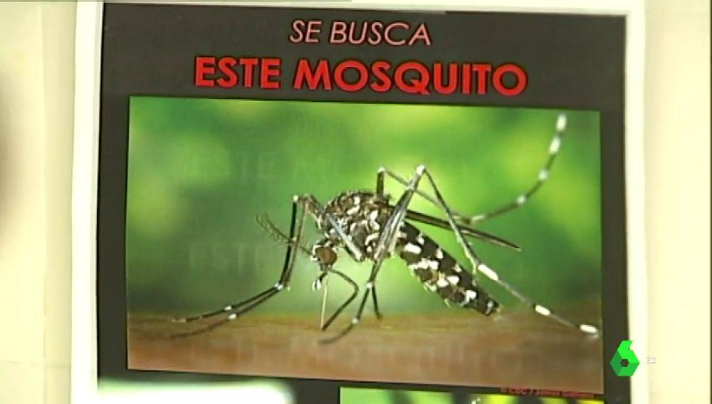 Alarmante consecuencia del cambio climático: enfermedades tropicales comenzarán a ser comunes en España
