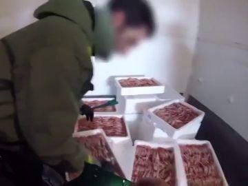 Inmovilizan 153,5 toneladas de cigalas valoradas en 4,5 millones de euros por no tener todas las garantías sanitarias