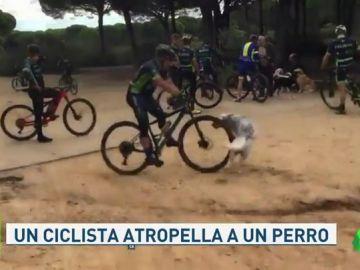 Un ciclista atropella a un perro en plena discusión con unos peatones en Chiclana