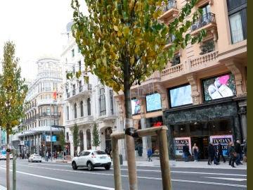 El Ayuntamiento de Madrid planta perales en la Gran Vía