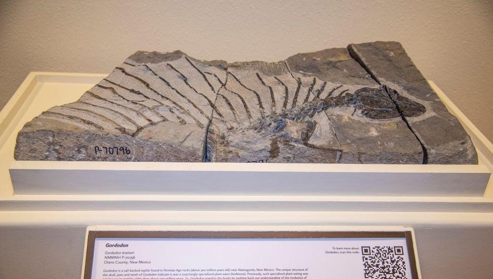 Imagen del fósil encontrado del herbívoro más antiguo