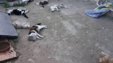 Algunos de los gatos brutalmente asesinados en el albergue